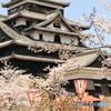 国宝松江城と桜