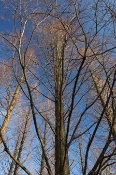 小春日和の木立ち道