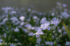春めく午後