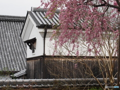當麻寺の春