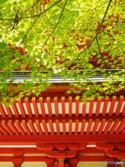 陽光の円成寺