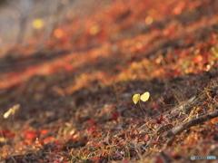 秋色カーペット