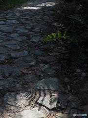 石畳のスポット