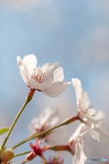 春日きらきら