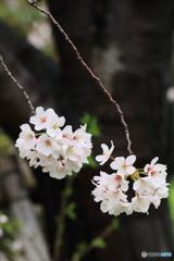 花ふたふさ