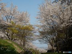 花の丘からみえる春
