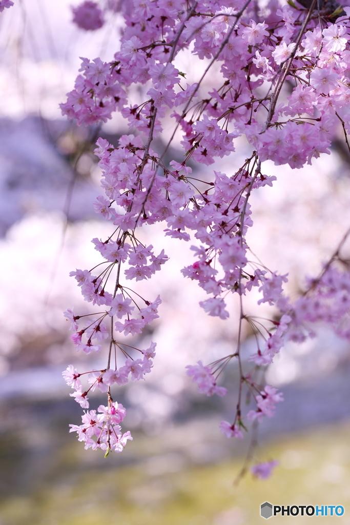 春光てらす午後
