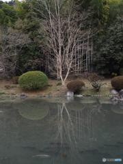 冬枯れの庭園