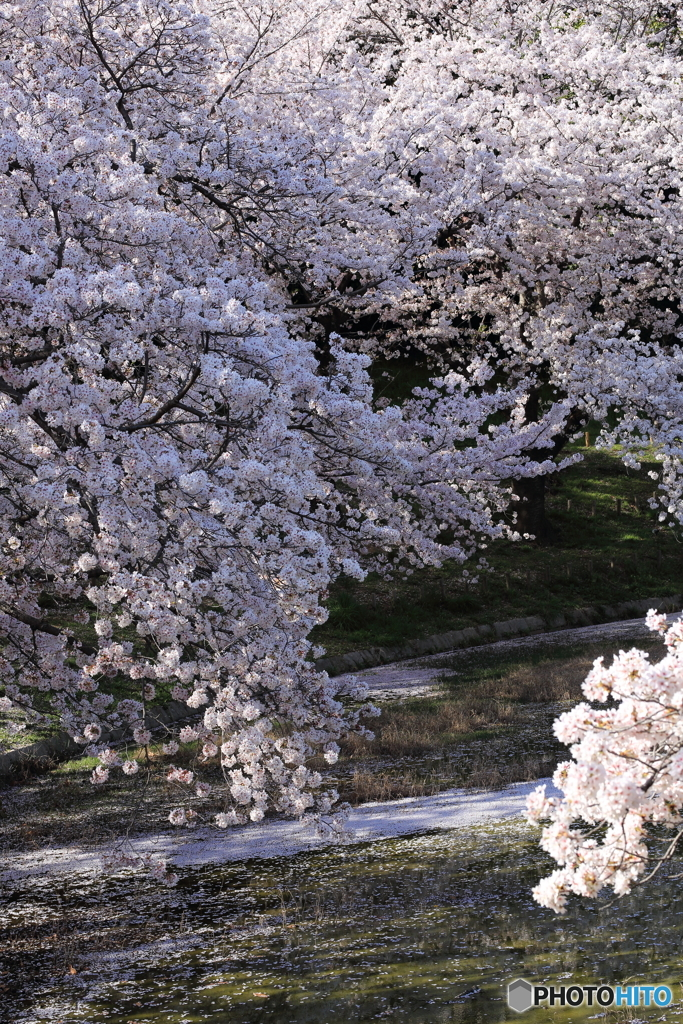 今、春爛漫