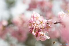 華やかな春へ