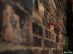 レンガ塀の赤