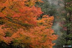 円山公園の秋
