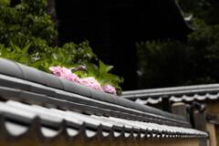 梅雨晴れの古寺