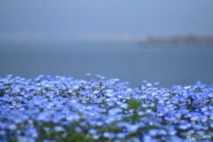 海に続く青
