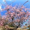 春空に花花