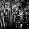 Bamboo Magic