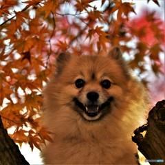 小太朗、秋色に染まる('-'*)♪