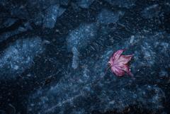凍てついた秋