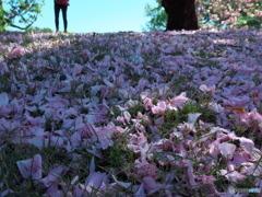 花びら絨毯 P1183957
