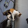 この猫はどこから来たのか、この猫は何者か、この猫はどこへ行くのか