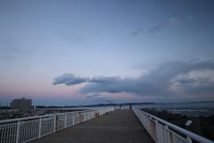 雲のレパード