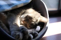 そして昼寝!
