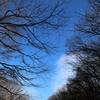 冬の樹々と遠くの月