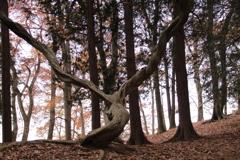 気になるっ樹