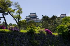 新緑の和歌山城 其の一