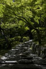 新緑の和歌山城 其の十