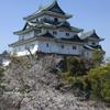 和歌山城の桜 #3