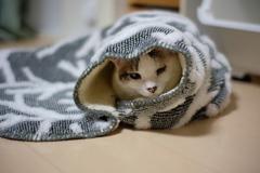 cat_548 これはチコの!