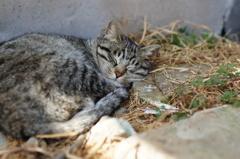 cat_242 Zzz…