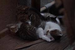 cat_380 ネムネム その2