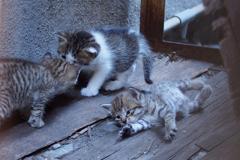cat_378 んにゃ〜