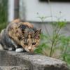cat_369 探しものはニャンですか?