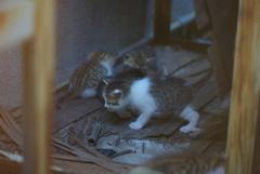 cat_373 新たな命
