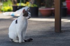 cat_215 見つめる