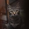 cat_366 真っすぐな瞳