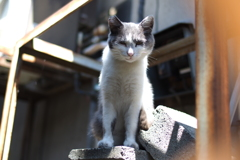 cat_560