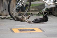 cat_356 「とりゃー」「ん?」