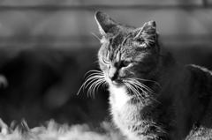 cat_445 佇む