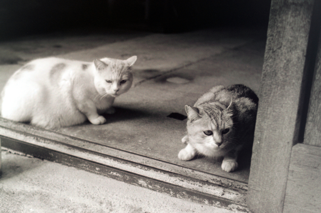 cat_408 フィルムにて