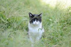 cat_571