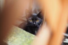 cat_372 こんにちは。