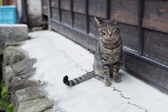 cat_376 それにゃーに?