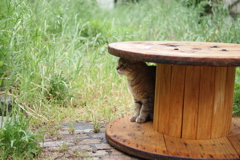 cat_553 雨宿り?