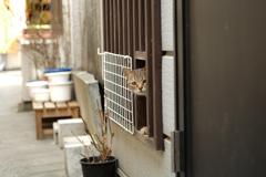 cat_241 待ち伏せて