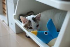 cat_554 にゃにコレ?