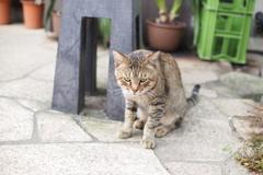 cat_381 猫背
